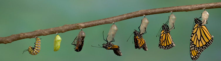 butterfliesdevelopmentfullrange_header.jpg